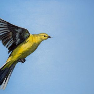 Yellow wagtail painting